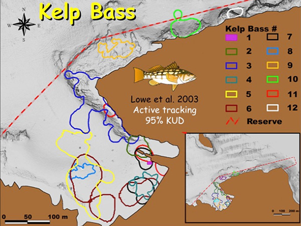 Fig. 10. home ranges of kelp bass