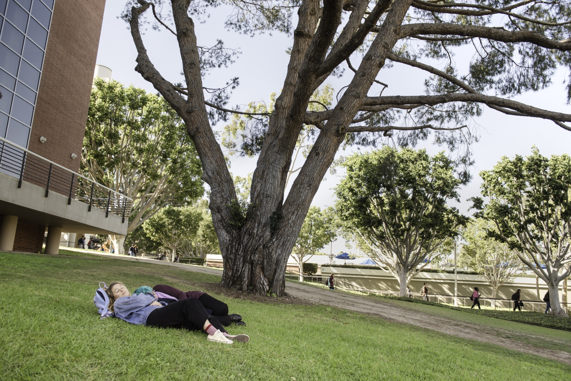 students nap on hill