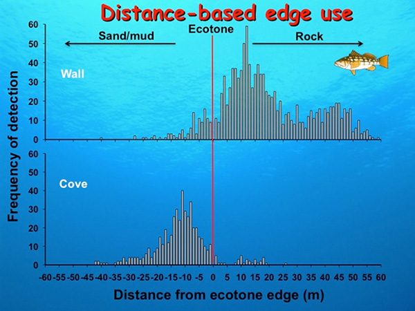 Fig. 11. kelp bass distance-based edge use